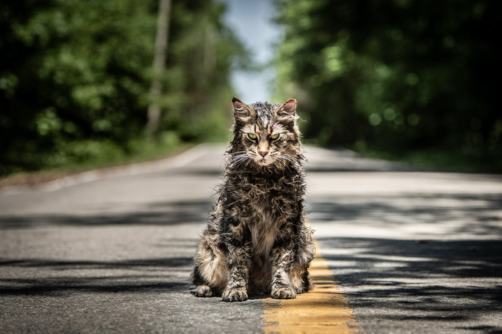 "Church the cat in ""Pet Sematary."""