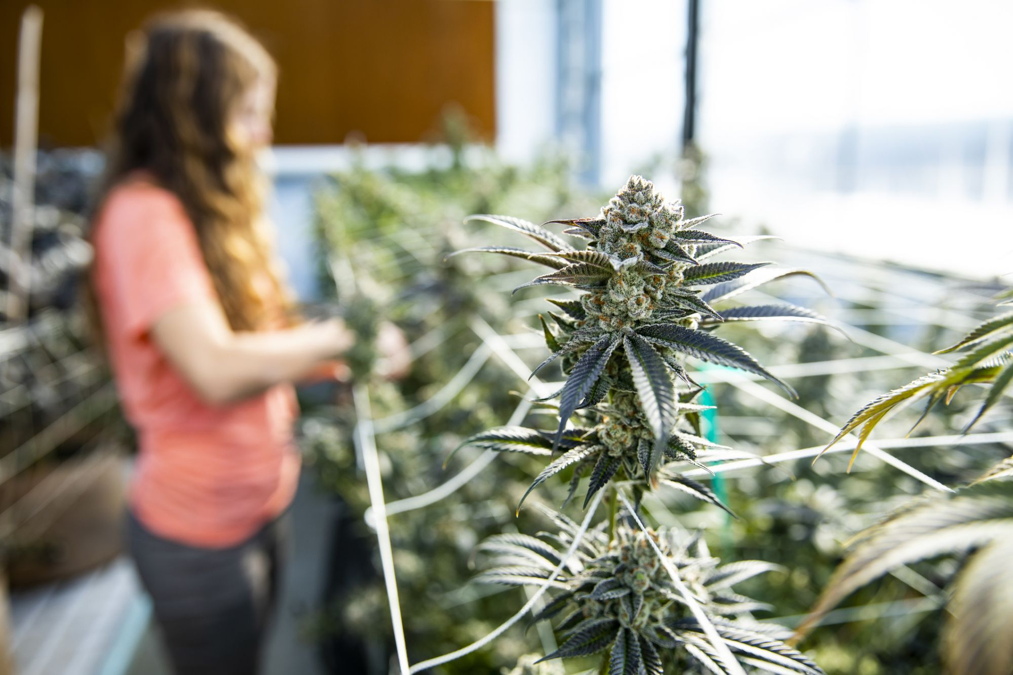 Millennials Are Launching Their Cannabis Careers With Summer Internships