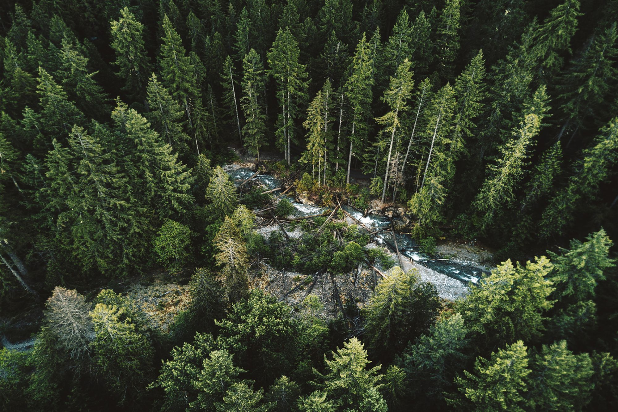 Reforestation: 4 Reasons Startup Founders Should Care