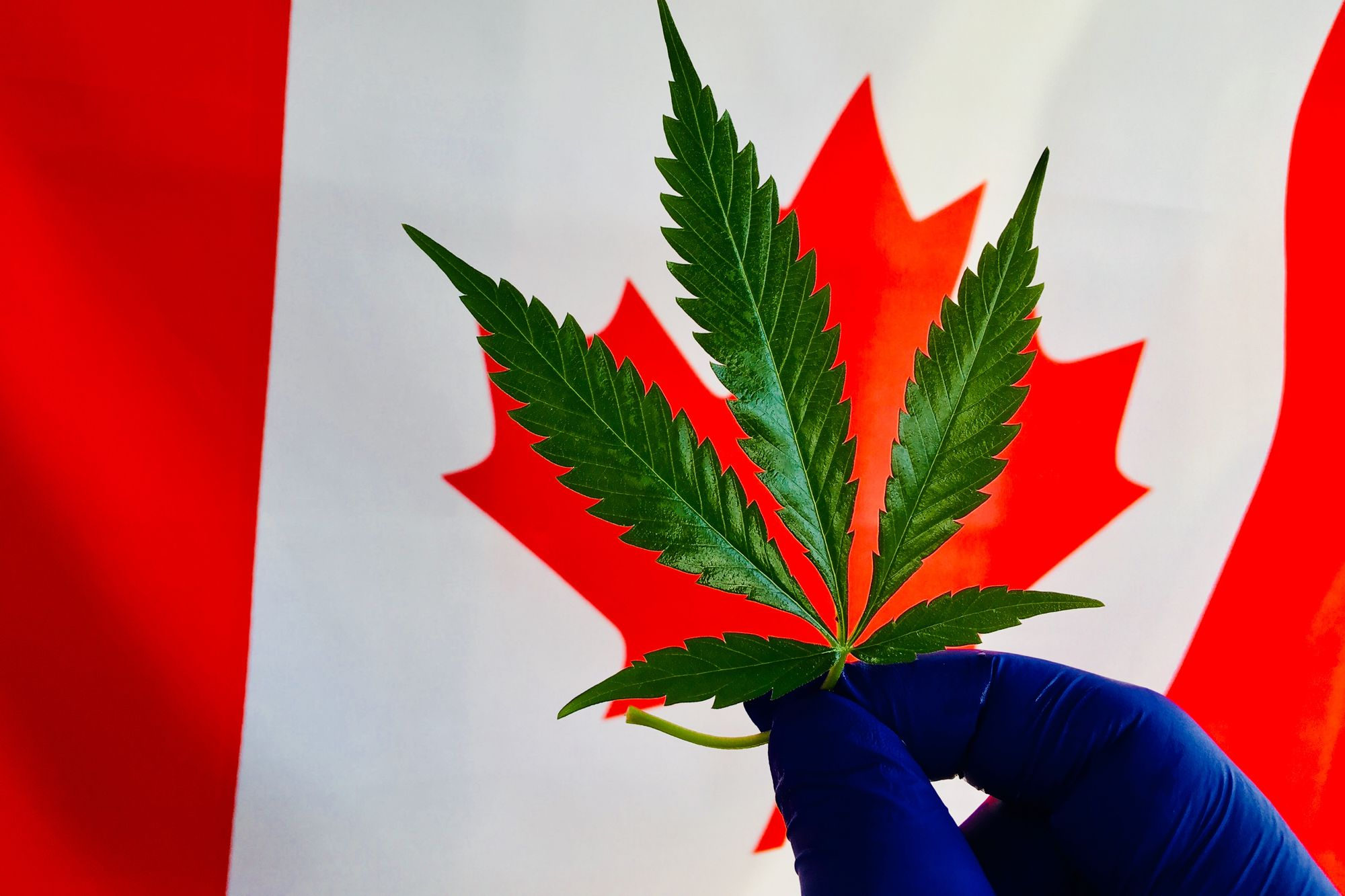 Researchers Overwhelm Canadian Government With Marijuana Research Requests