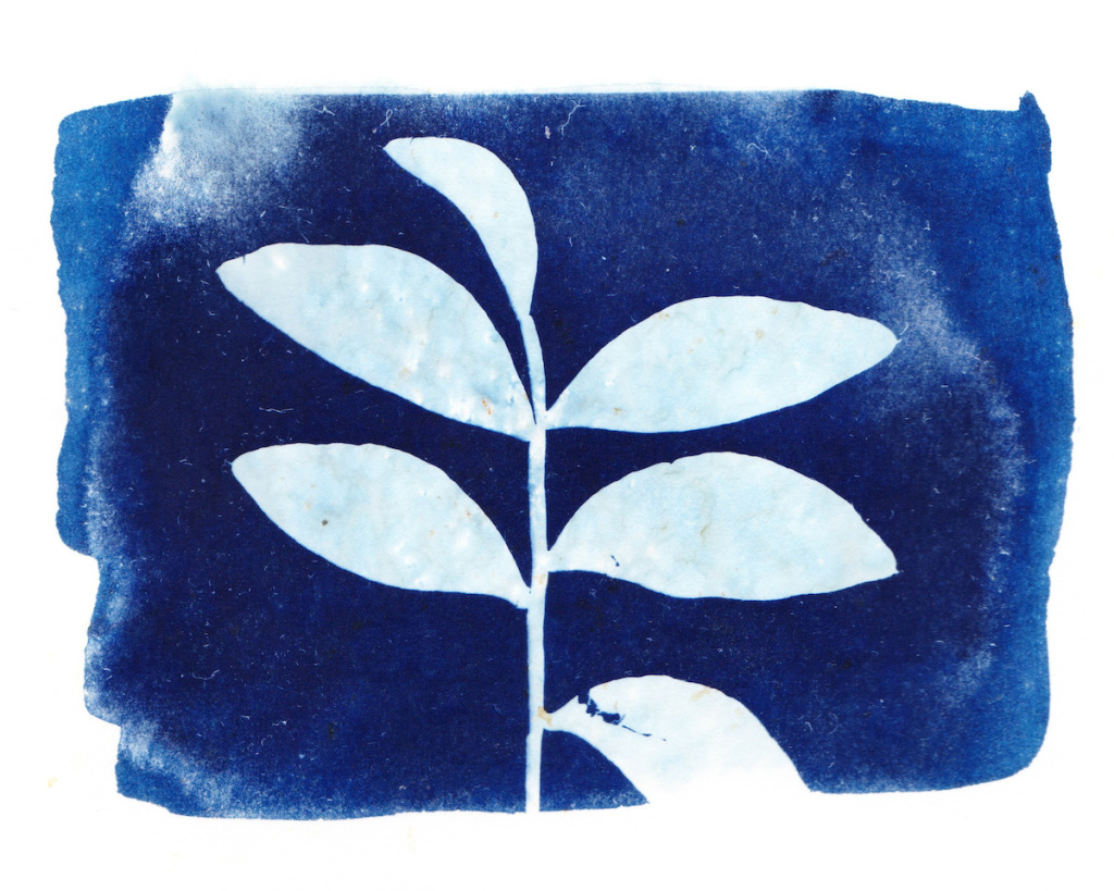 The Best Cyanotype Solutions for Unique Prints