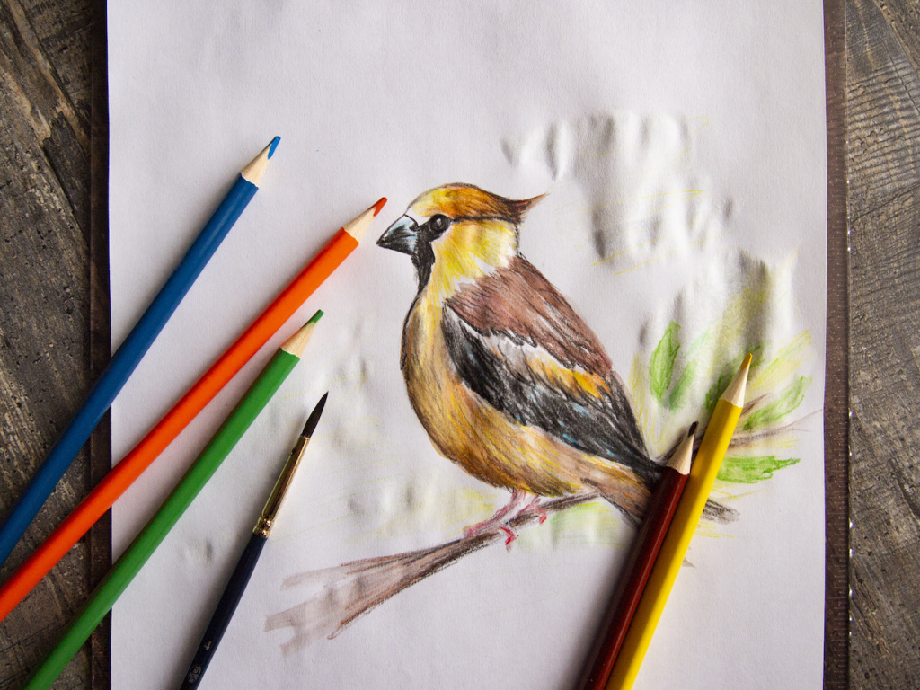 The Best Watercolor Pencils for Painterly Effects