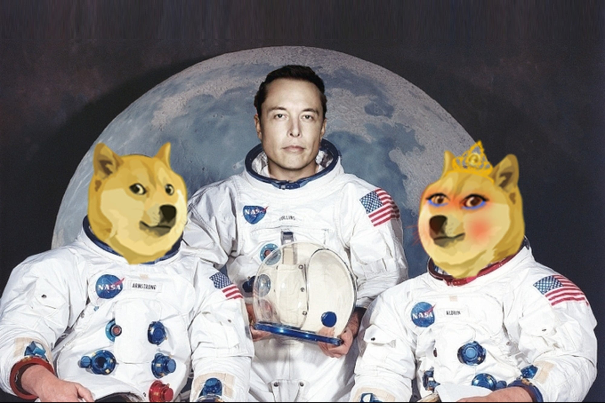 What is the Wifedoge? Meet the cryptocurrency 'wife' of Dogecoin that grew more than 3,000% in one day and Elon Musk already 'liked' it